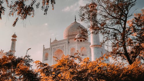 Low Angle Shot of Taj Mahal through Tree Branches