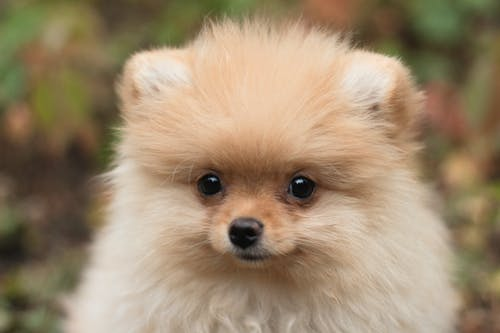 Photos gratuites de amusant, animal, canin
