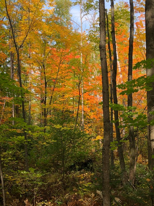 Free stock photo of autumn, autumn colors, nature trail