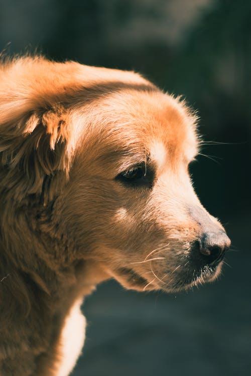 人, 動物, 可愛 的 免費圖庫相片