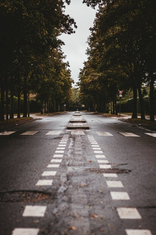 Empty asphalt road between rows trees