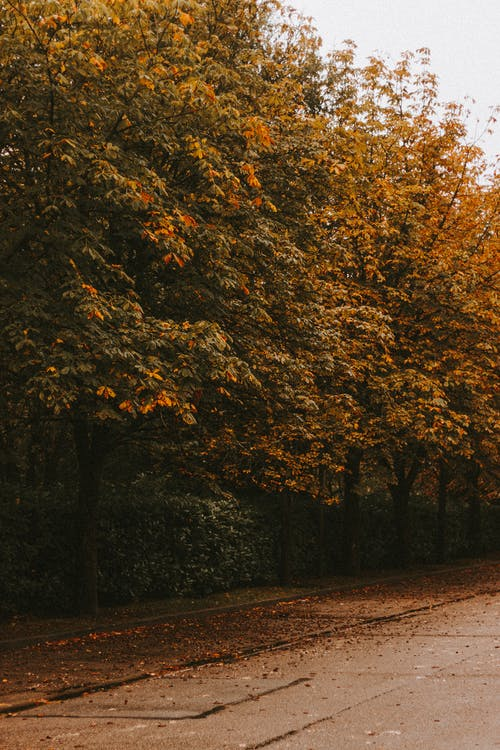 Empty asphalt road with fallen yellow leaves in alley in autumn park in cloudy day