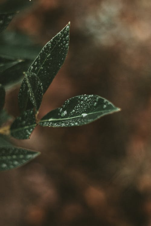 Green wet leaves of plant with drops of water on blurred brown background