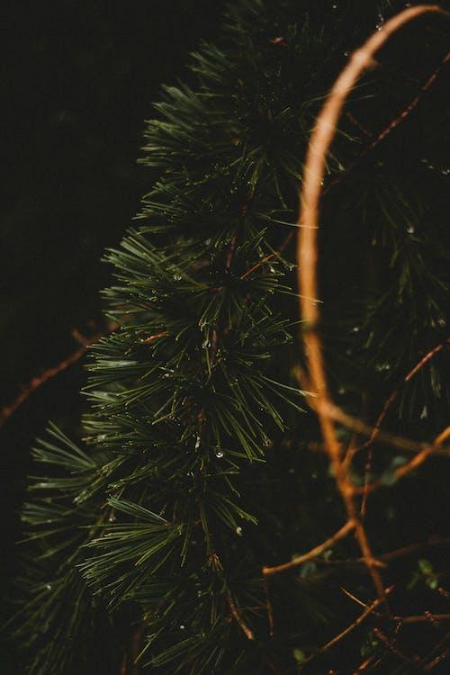 Decorative plastic branch of Christmas tree