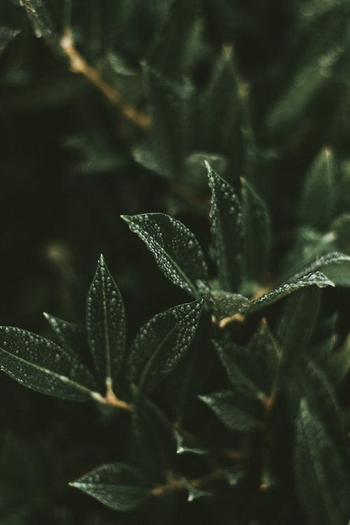 Wet fresh green leaves with small drops of water growing on young branch of tree on blurred background