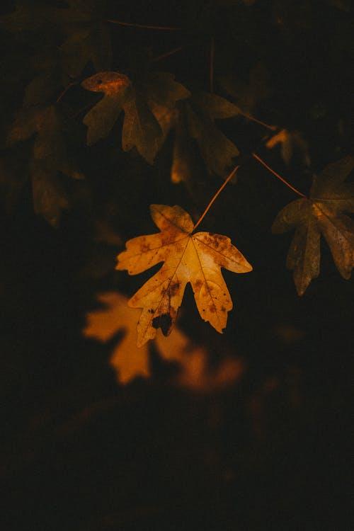 Foto d'estoc gratuïta de a l'aire lliure, arbre, auró