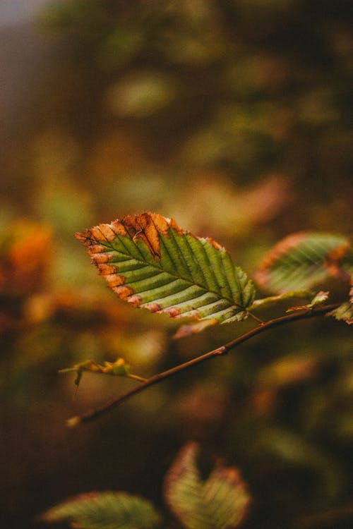 Tree branch with leaves in autumn