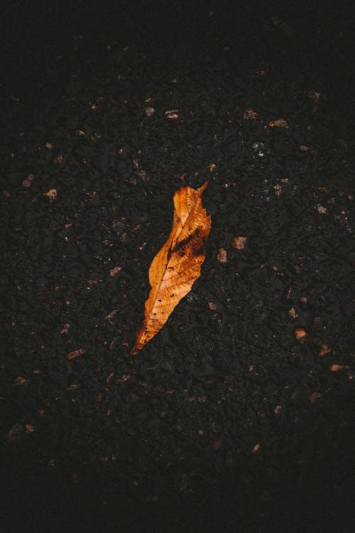Dry leaf lying on asphalt