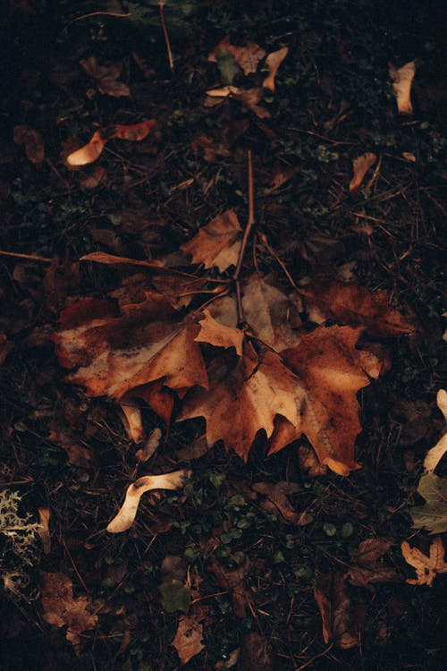 Wet branch with maple leaves lying on ground
