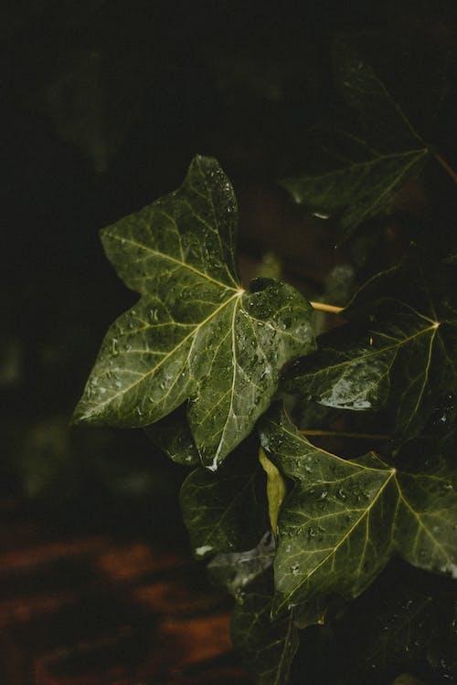 Green wet leaves on dark background