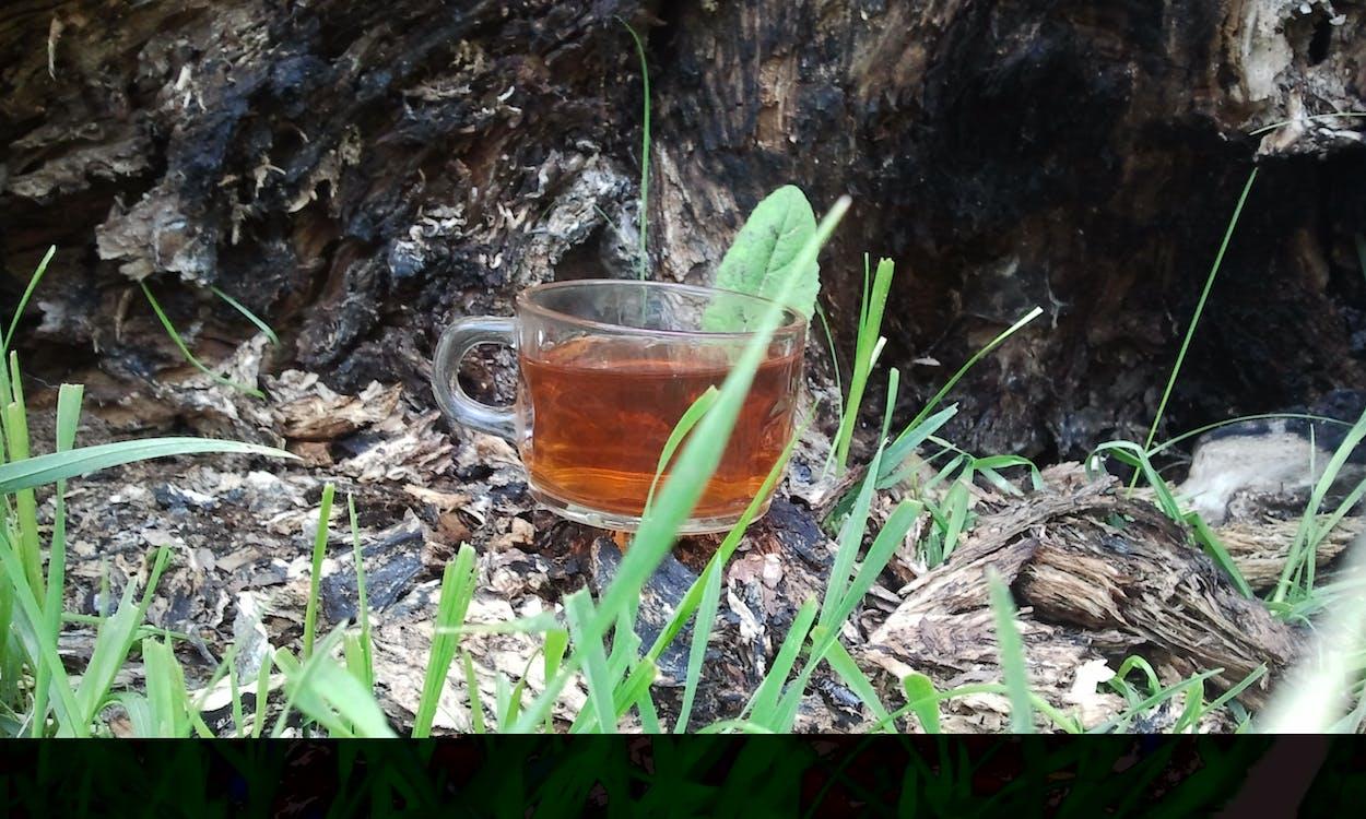 Free stock photo of ardabil, germi, Iran