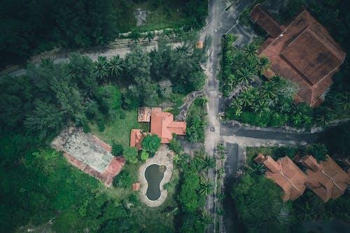 Villas along road in green forest