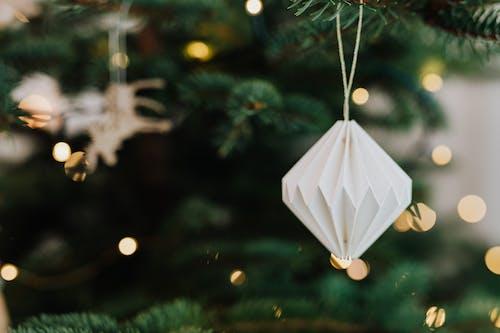 Δωρεάν στοκ φωτογραφιών με βάθος πεδίου, κοντινό πλάνο, Χριστούγεννα