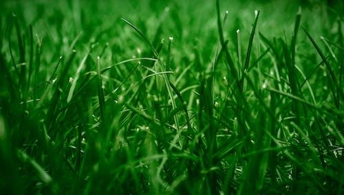 Kostnadsfri bild av blad, blad av gräs, dagg, fält