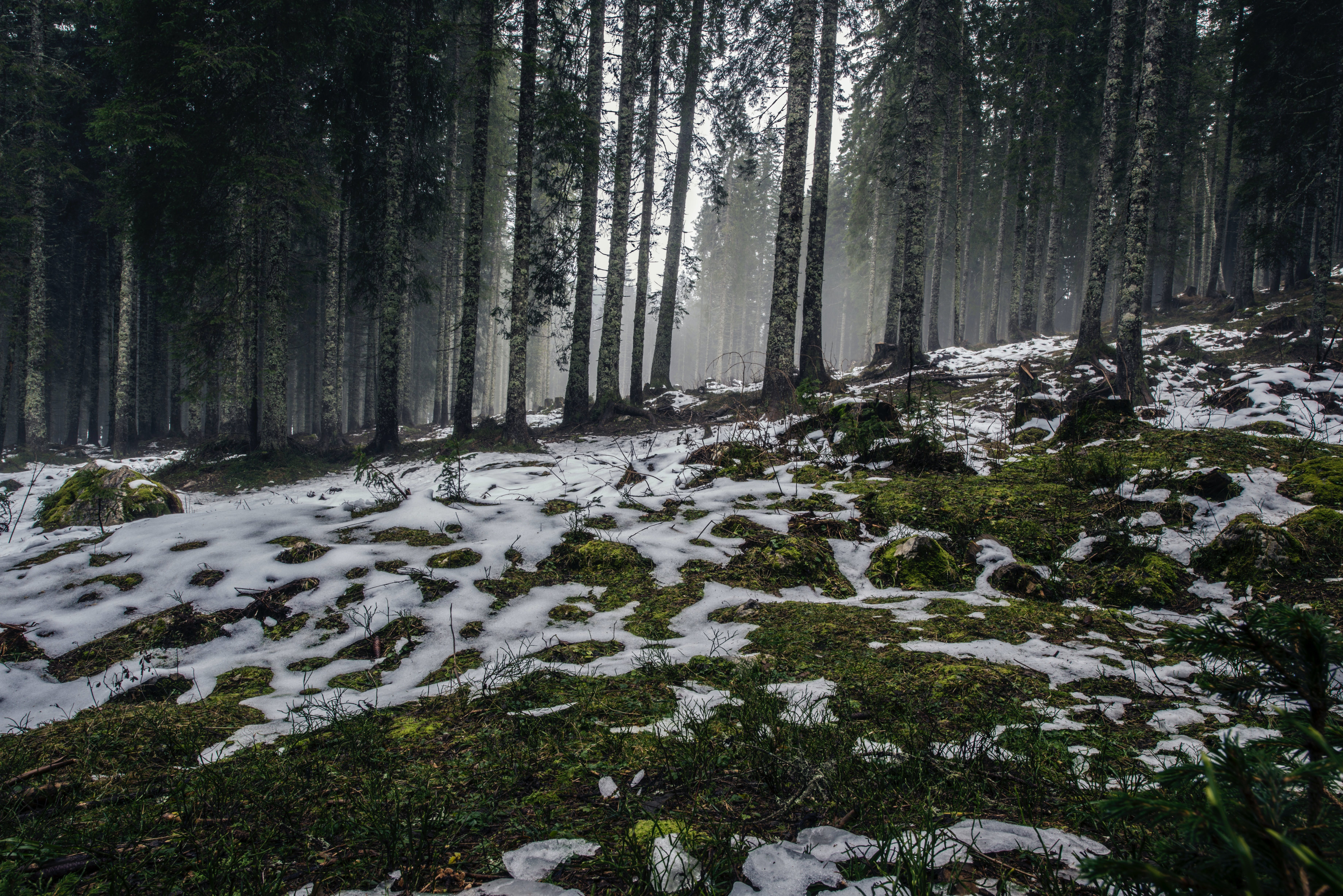 cold, foggy, forest