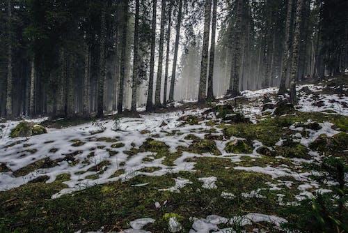 Бесплатное стоковое фото с деревья, живописный, идиллический, лед
