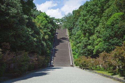 京都, 伏見城, 低角度, 公園 的 免費圖庫相片