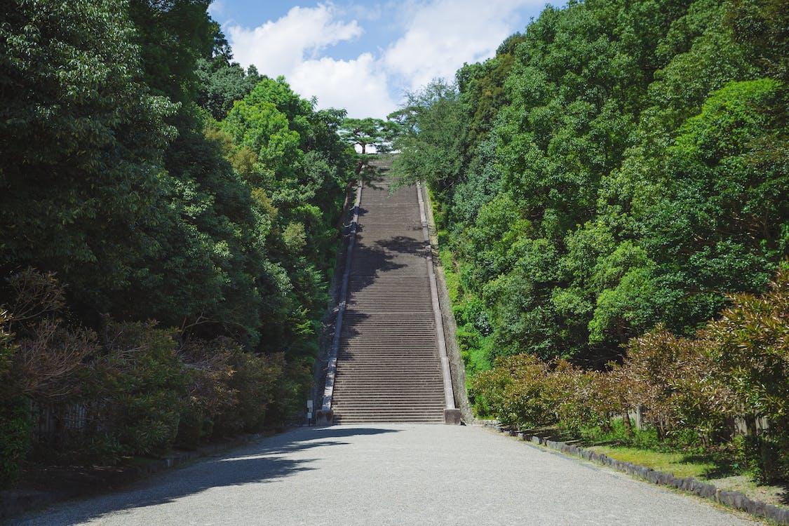 Cầu Thang Dốc được Bao Quanh Bởi Cây Cối Tươi Tốt Trong Công Viên