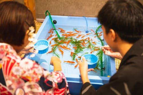 Бесплатное стоковое фото с аквариумные рыбки, Анонимный, апельсин, безликий