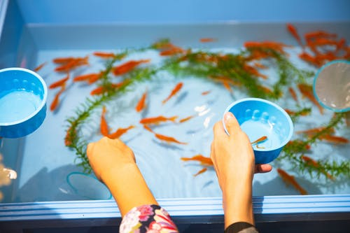 High angle faceless friends catching small orange aquarium fish from plastic basin to put in clean fishbowl