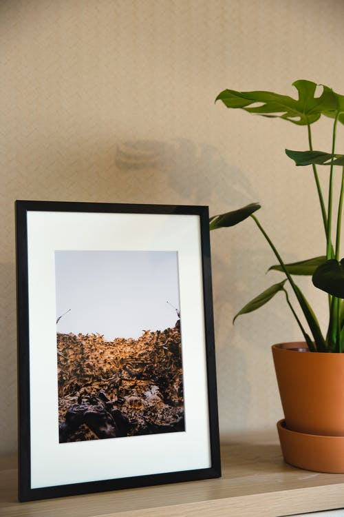 Shelf with nature picture put in black frame and lush potted houseplant in light room