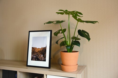 Shelf unit with nature image in black frame placed near verdant potted houseplant in light living room