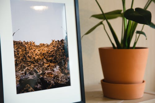 Framed picture placed on shelf near potted houseplant