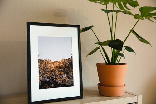 Wooden shelving unit with framed photo and green houseplant in beige ceramic pot