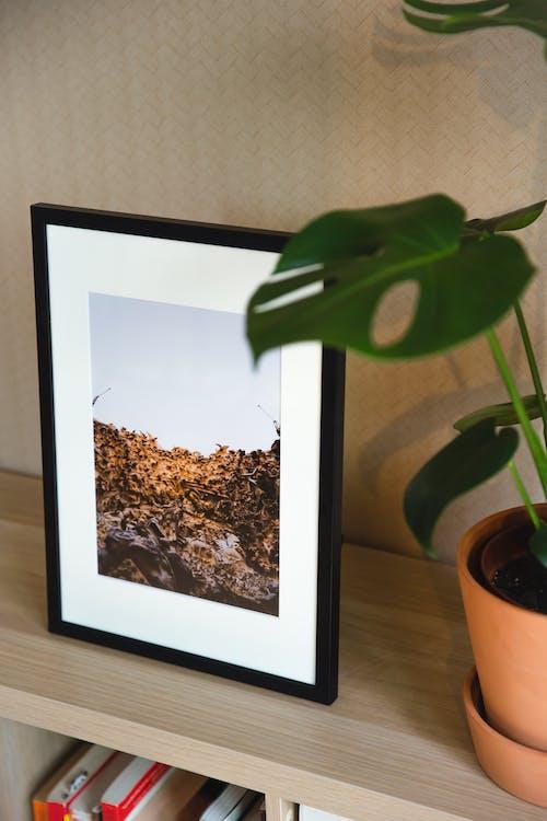 Bookshelf with framed image and houseplant