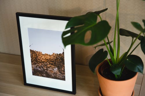 Shelf with framed photo and green plant