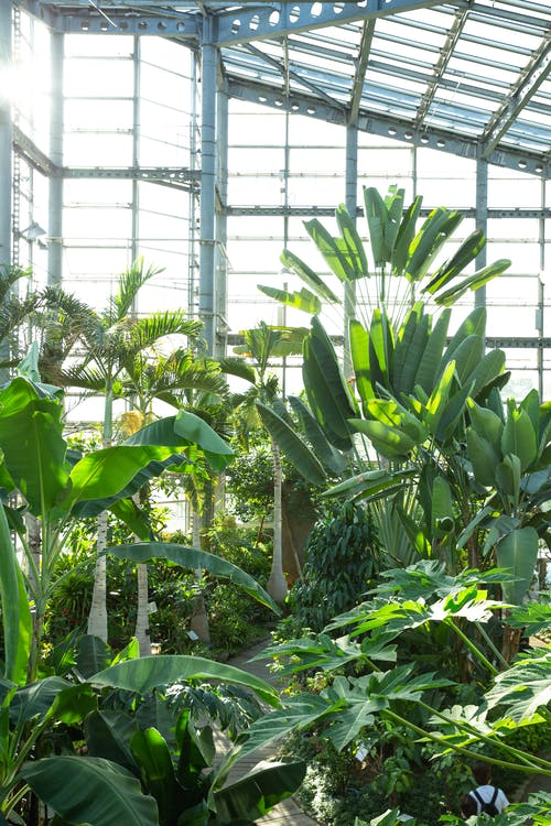 Greenhouse with various tropical plants