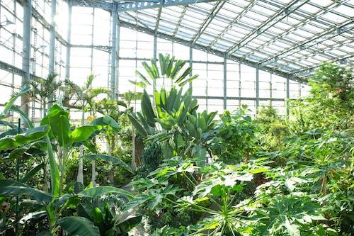 Green plants growing in modern glass greenhouse