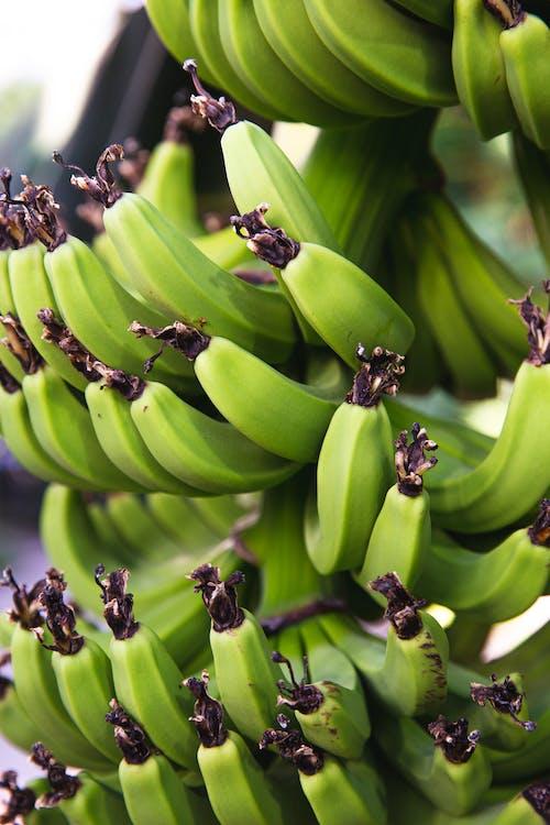 Unripened bananas growing on palm tree