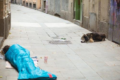 Бездомный с собакой, спящей на улице