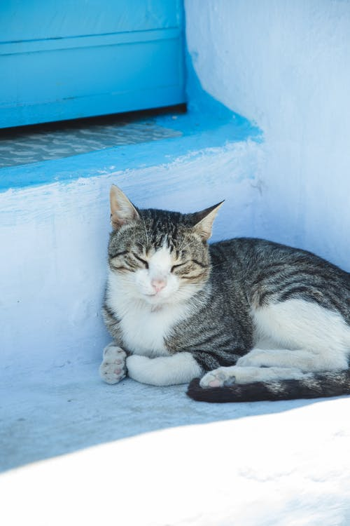 Sleepy young tabby with fluffy gray fur lying with eyes closed on stone house stairs in shadow