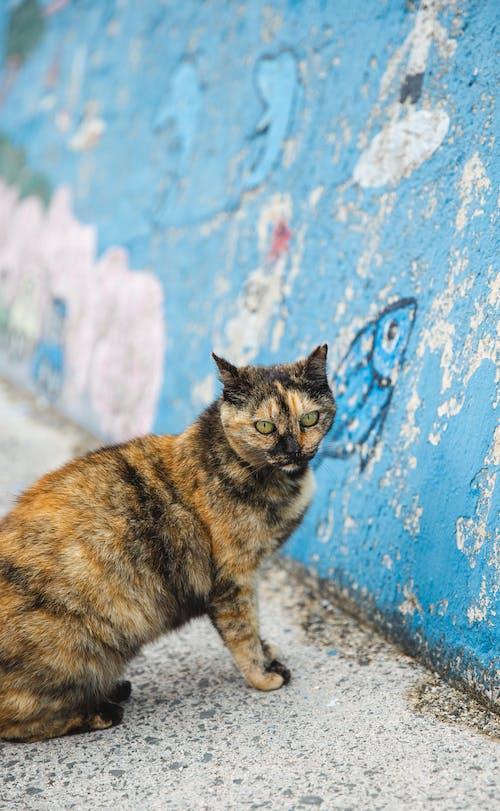 Mèo đốm Ngồi Gần Bức Tường Xanh