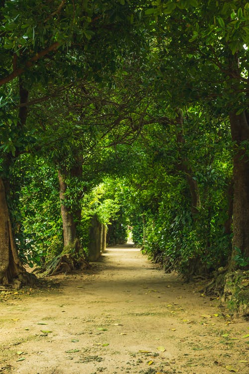 Rural walkway surrounded with tall green tress with lush foliage on crowns growing in park in nature on summer day