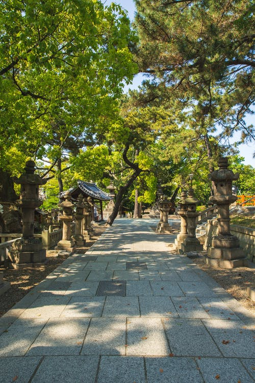 Narrow long alley located between aged stone lanterns and tall evergreen trees in oriental park on cloudless sunny weather