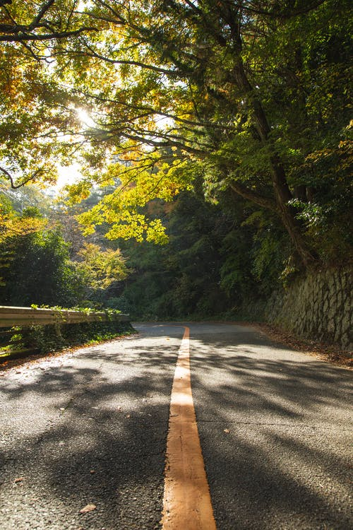 Narrow asphalt road among forest trees on sunny day