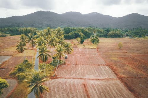 ağaç, alan, arazi içeren Ücretsiz stok fotoğraf