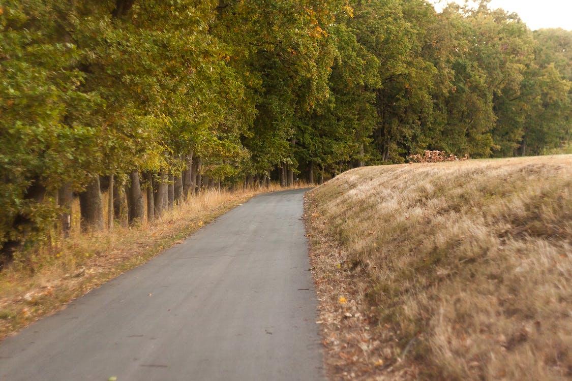 Foto d'estoc gratuïta de arbres, carretera, profunditat de camp