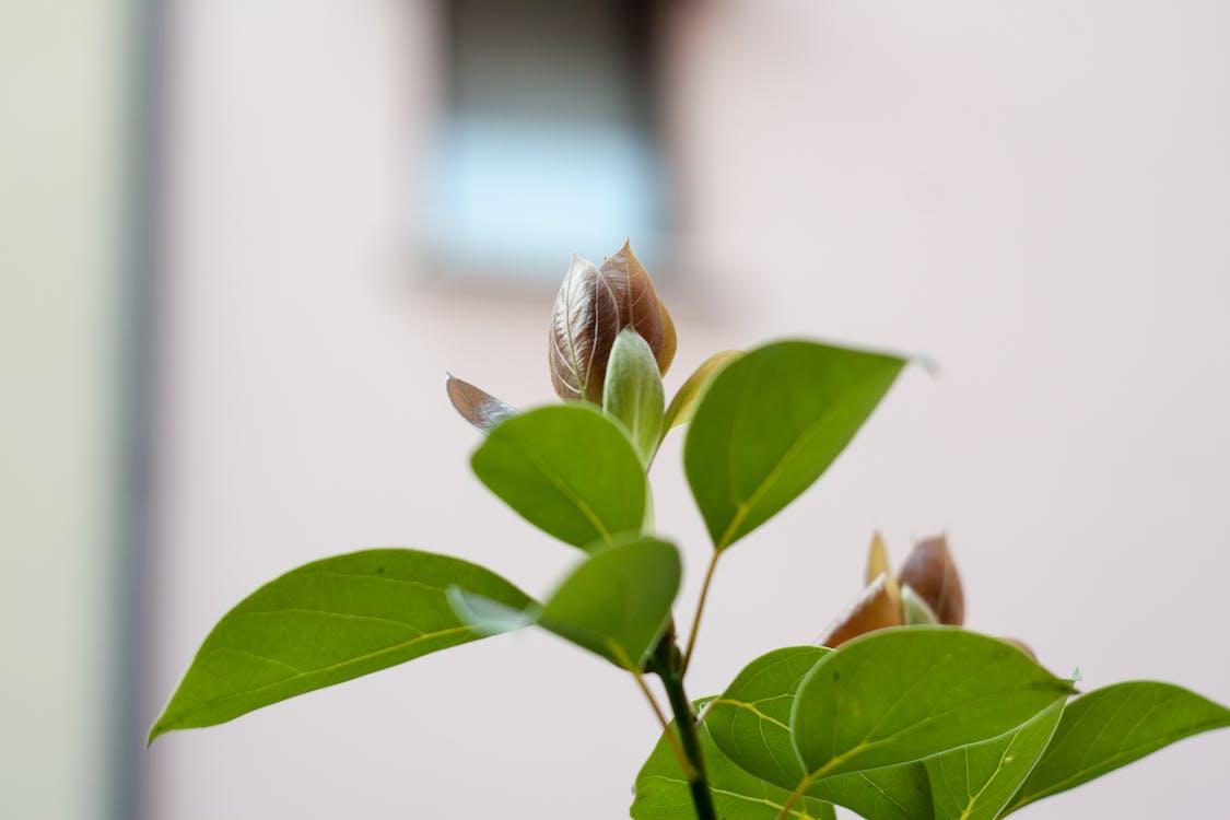 Foto d'estoc gratuïta de brot, brot de flors, flor