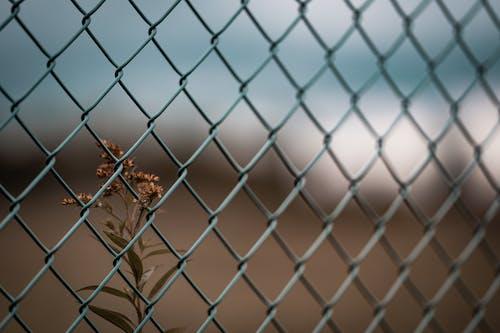 Brown Plant Behind Metal Fence