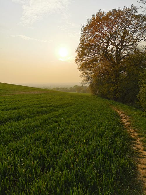 Free stock photo of green field, sunset, uk sunset