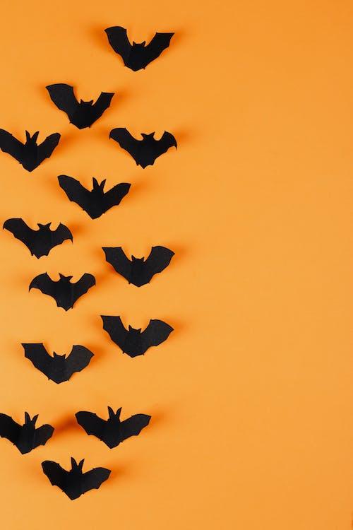 オレンジ色の背景, コウモリ, コピースペース, シルエットの無料の写真素材