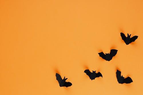 オレンジ色の背景, コピースペース, シルエット, ハッピーハロウィンの無料の写真素材