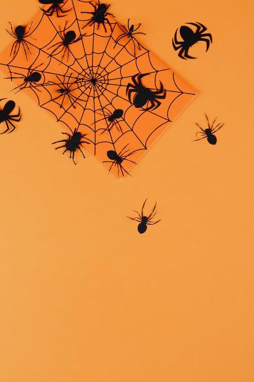 オレンジ色の背景, クモ, クモの巣, コピースペースの無料の写真素材