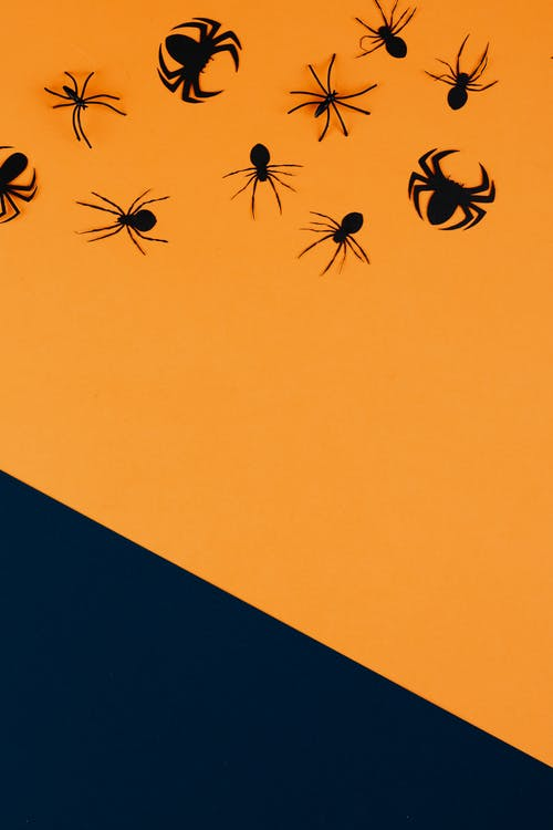 Black Paper Spiders on Orange and Black Background