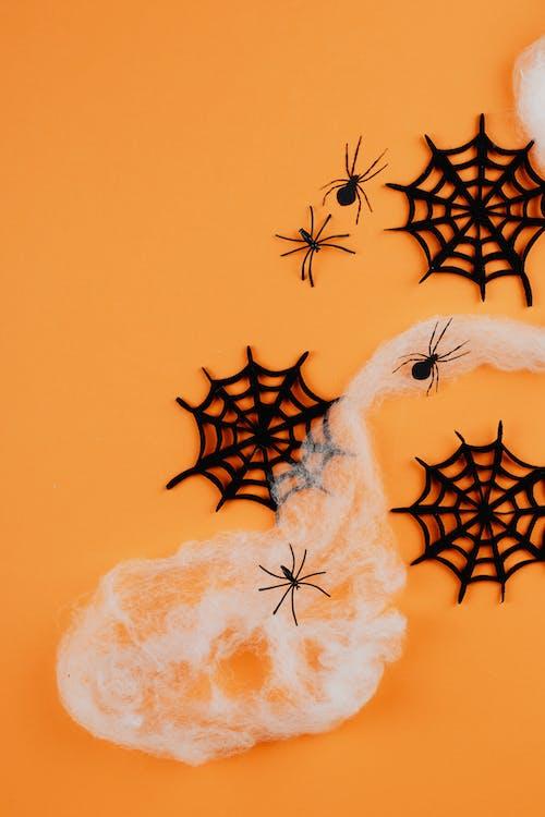 オレンジ色の背景, クモ, コットン, コピースペースの無料の写真素材