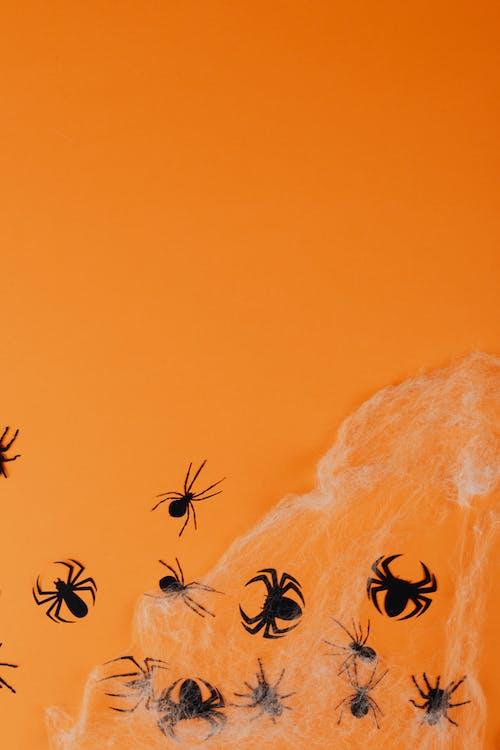 copy space, 거미, 거미류의 무료 스톡 사진
